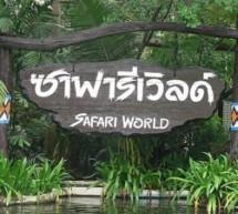 Công viên Safari World – Điểm vui chơi không thể bỏ qua