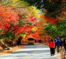 Tận hưởng mùa thu với Công viên Wolmi